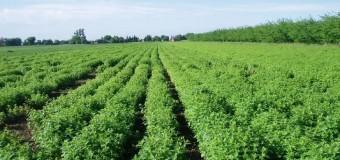 Sherbela, bima më shëruese në botë – Të marten ligjeratë për bujqit nga Ulqini
