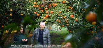 Në mbretërinë e mandarinave dhe klementinës të Anton Elezit nga Shtoji i Ulqinit (VIDEO)