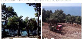 Sondazhi online: 94% e qytetarëve mendojnë se Pylli i pishave duhet ruajtur nga betonizimi